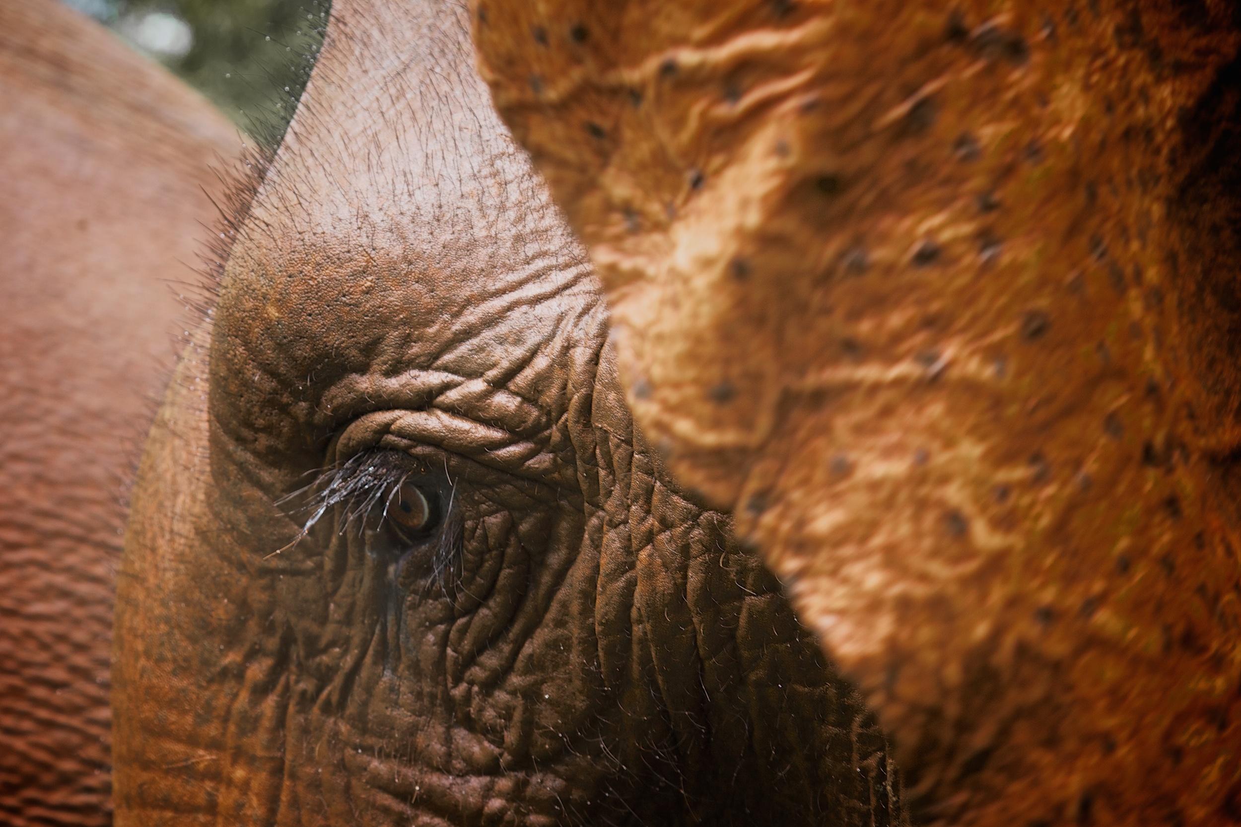 elephants_81.jpg