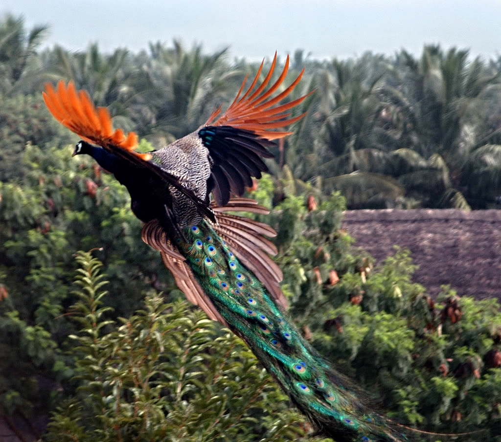 santhosh_bird.jpg
