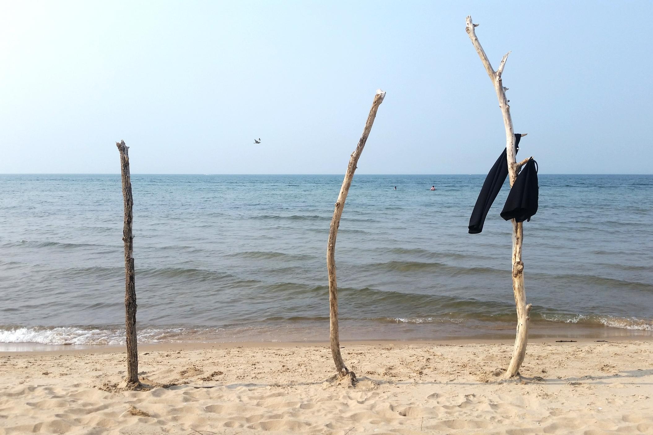 beachtrees.jpg