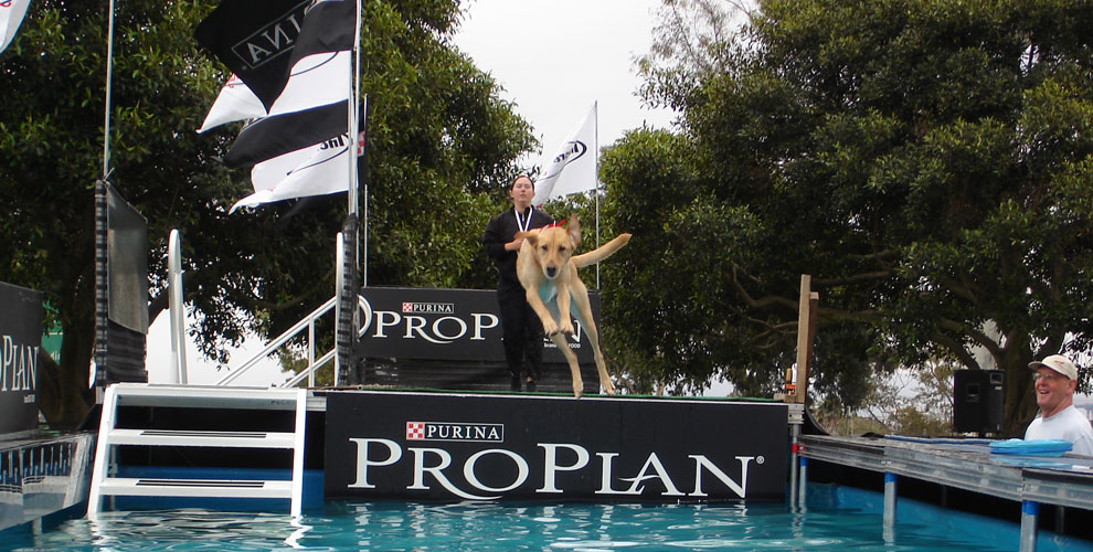 Canine athlete exhibitions at fairs, festivals and sporting events.