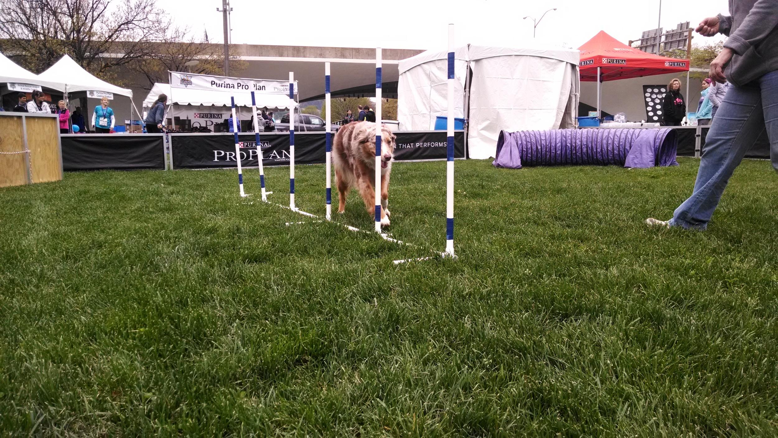 Petsmart Pro Plan Agility Tour