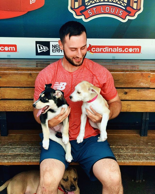 A few #behindthescenes pics from our photoshoot with the @cardinals & @apaofmo before @purina's Pooches in the Ballpark last weekend! 📸⚾️🐶 #PurinaPooches #eventmarketing