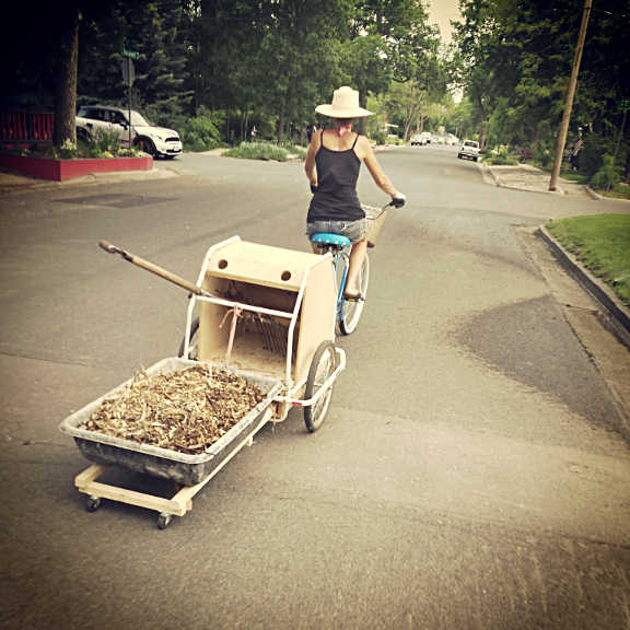 Biking a load of wood chip mulch to one of the neighbor plots