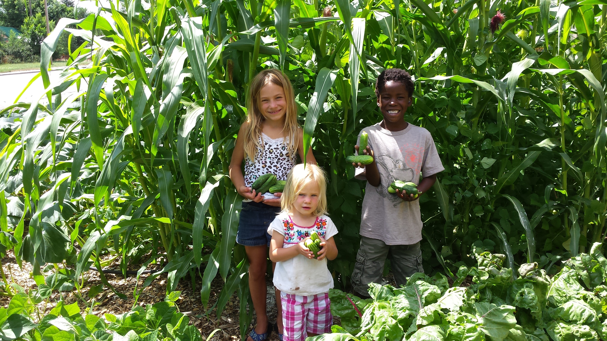 Peterson kids showing their bounty of cucumbers!