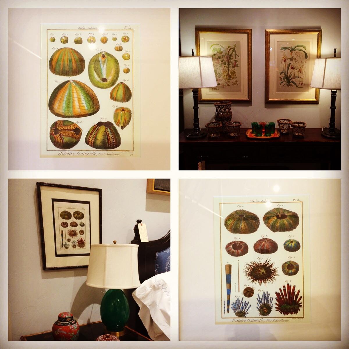 Botanical Studies Art