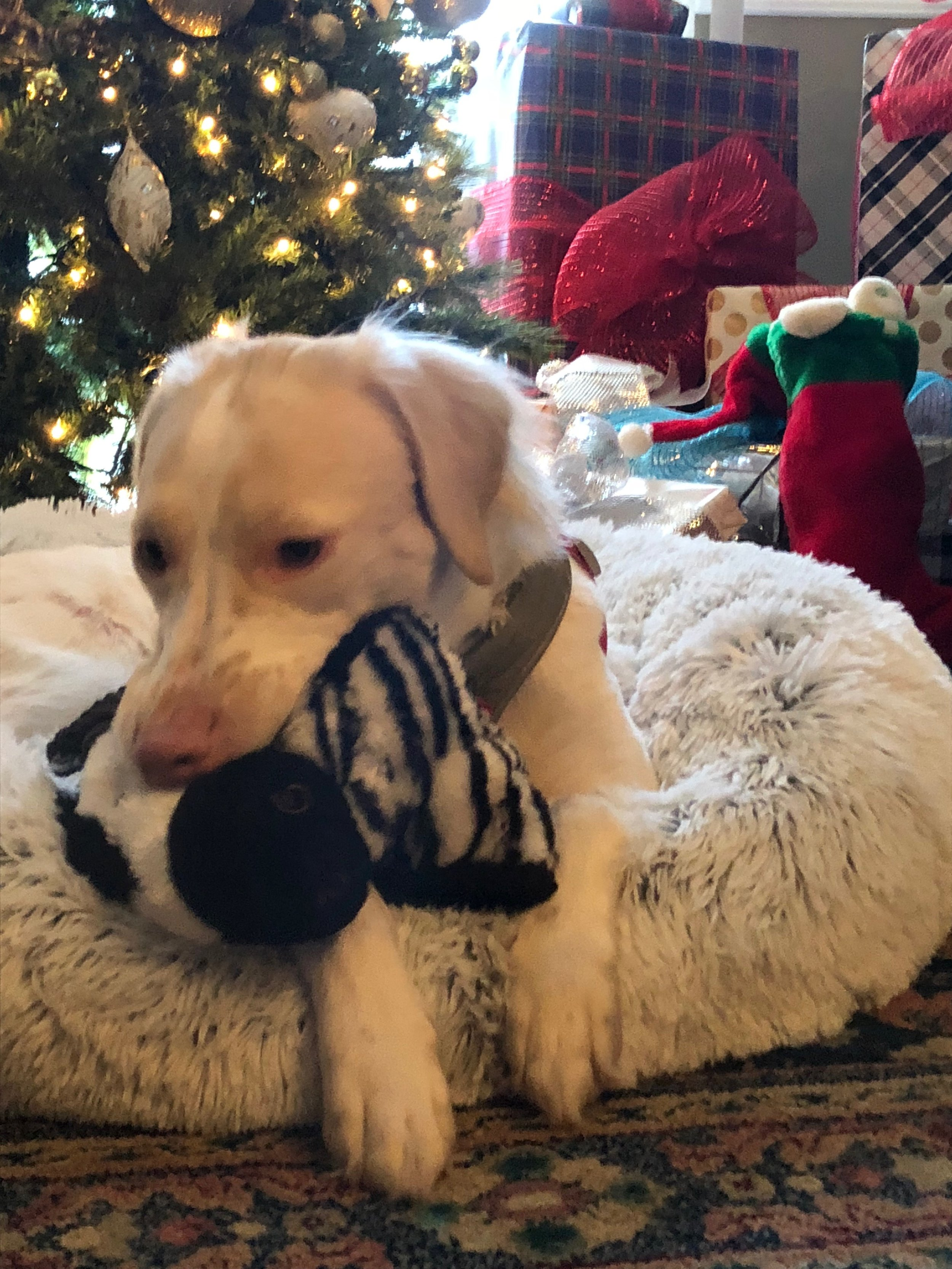 Moxie Christmas 2017.