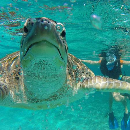sea-turtle-riviera-maya.jpg
