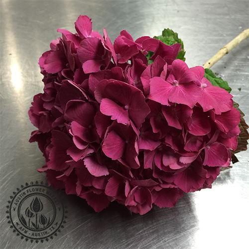 hydrangea-dark-pink.jpg