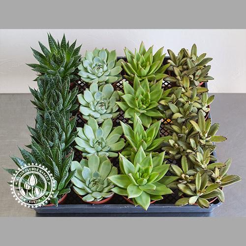 medium-succulent-tray-2.jpg