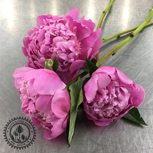 peonies_dark-pink.jpg