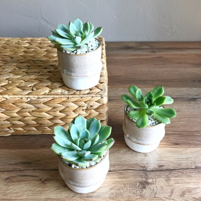 Valley Trio arrangement from Succulent Garden collection at King Florist
