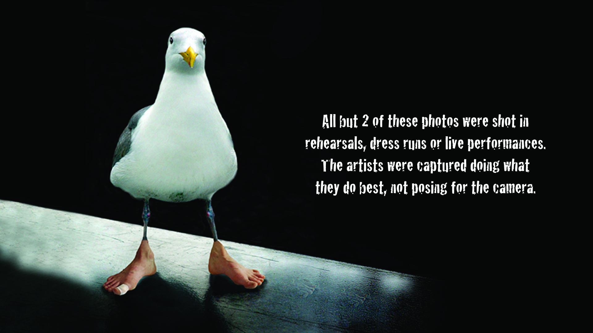 gull a.jpg