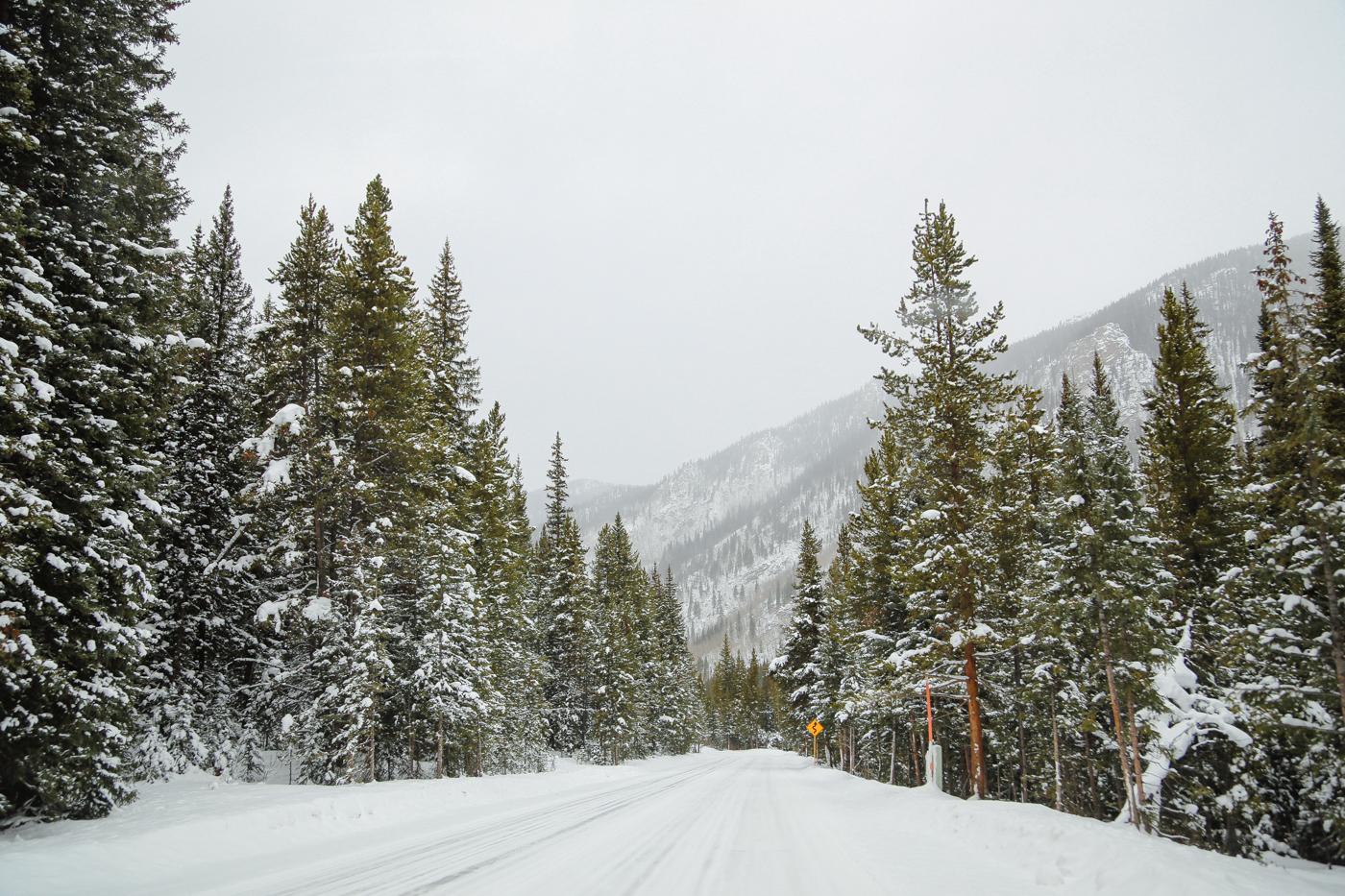 lauren-testa-winter-playlist