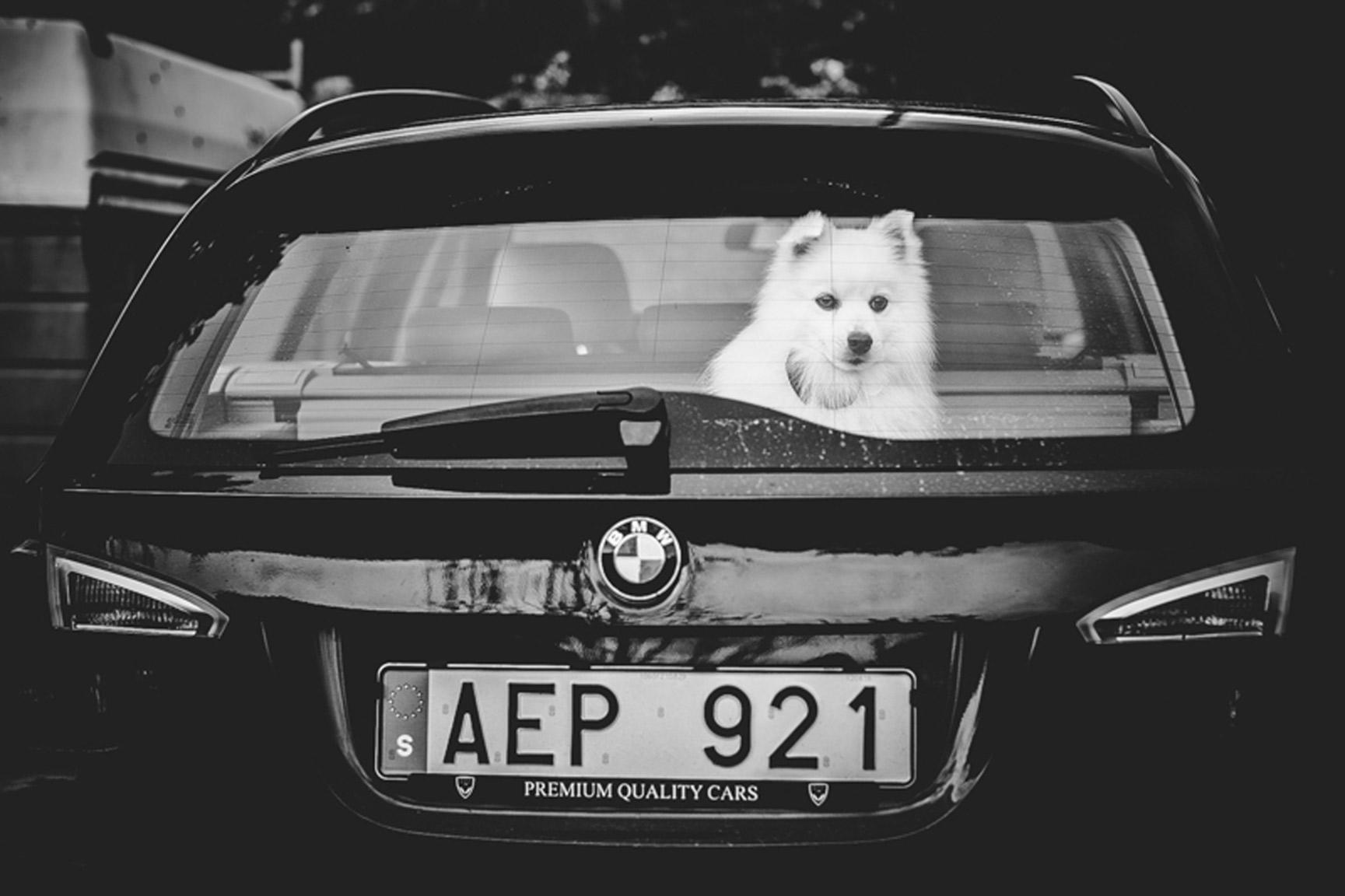 AustinWeddingPhotographer-SwedenWedding007.jpg