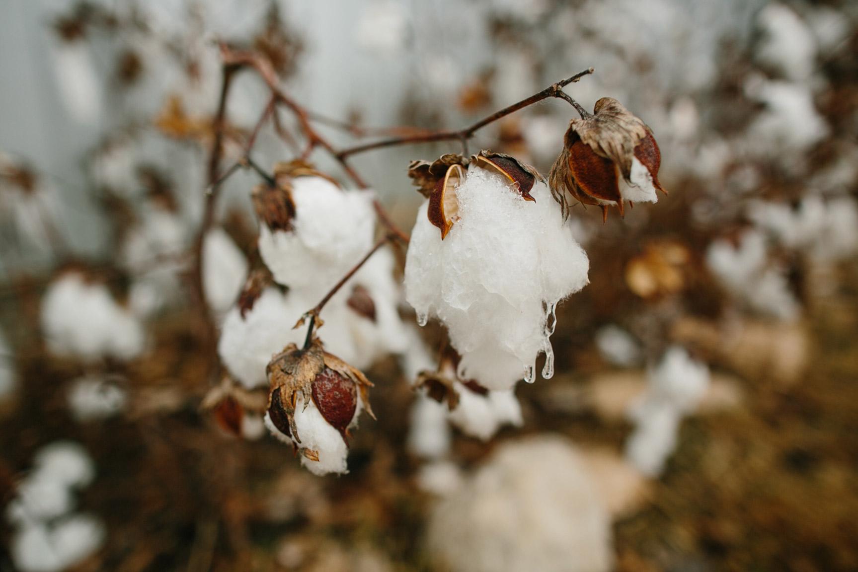 Cotton_Creek_Barn_Winter_Wedding_WeddingPhotographer001.jpg