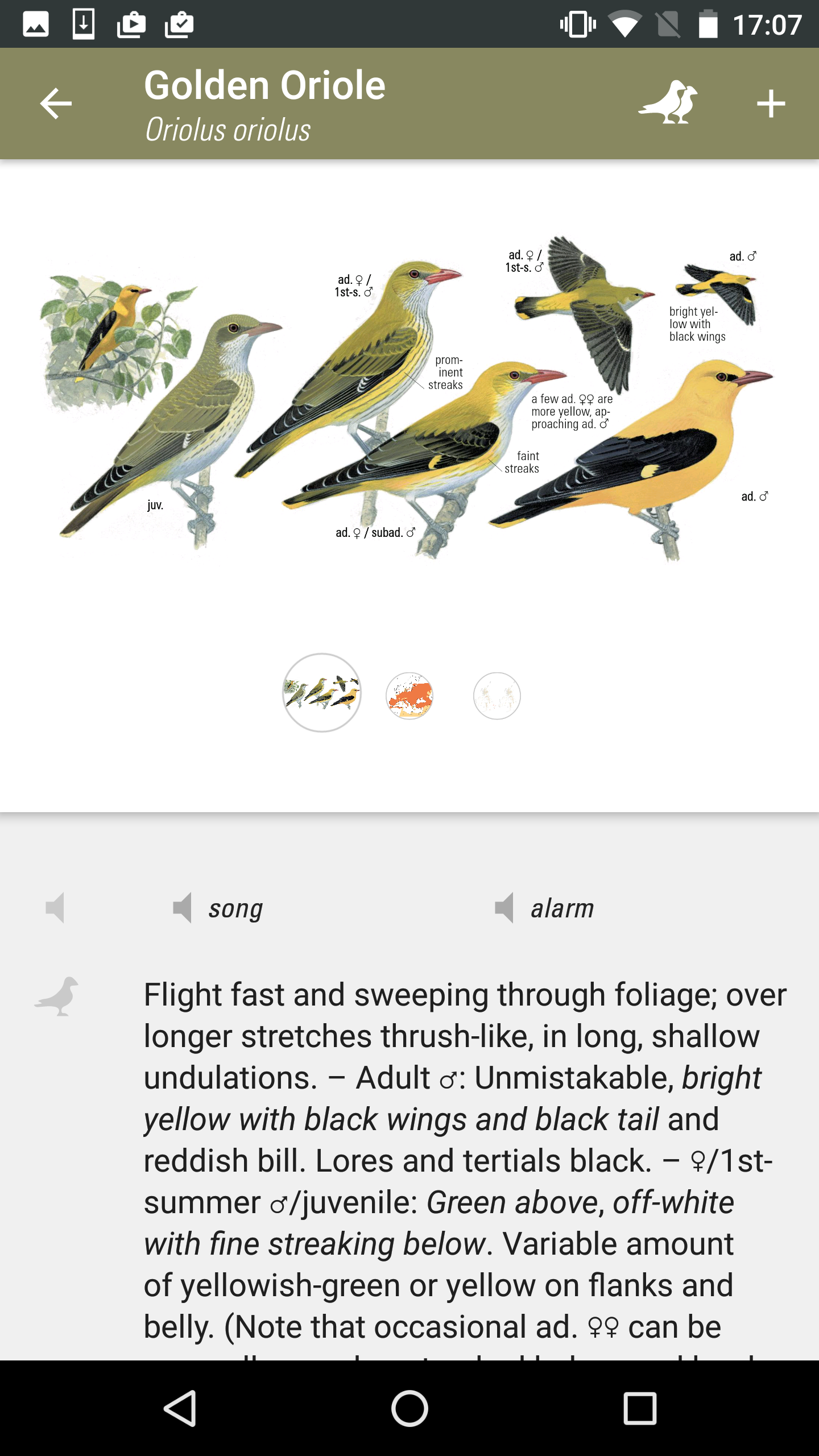 Collins Bird Guide on Android — NatureGuides