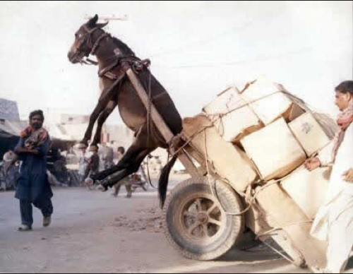 This donkey should have scaled.