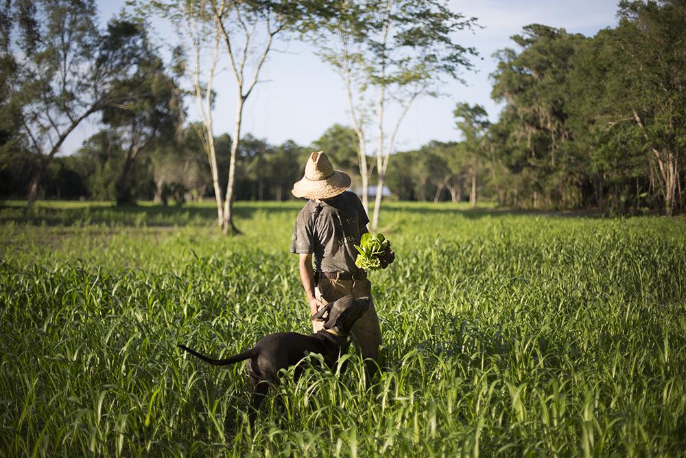 Sudex Cover Crop Fields