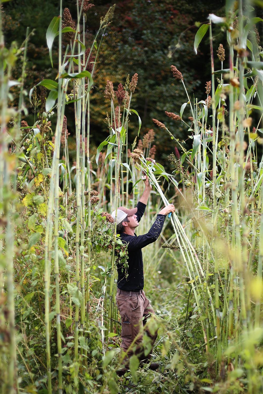 Sorghum Harvest, Canewater Appalachia