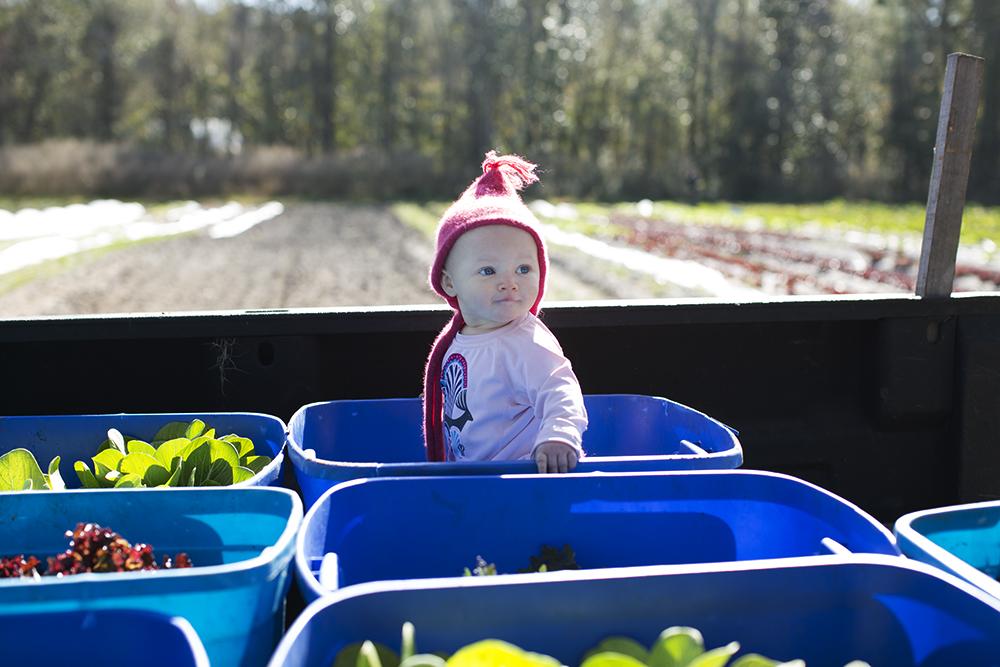Emmalou managing Friday harvest