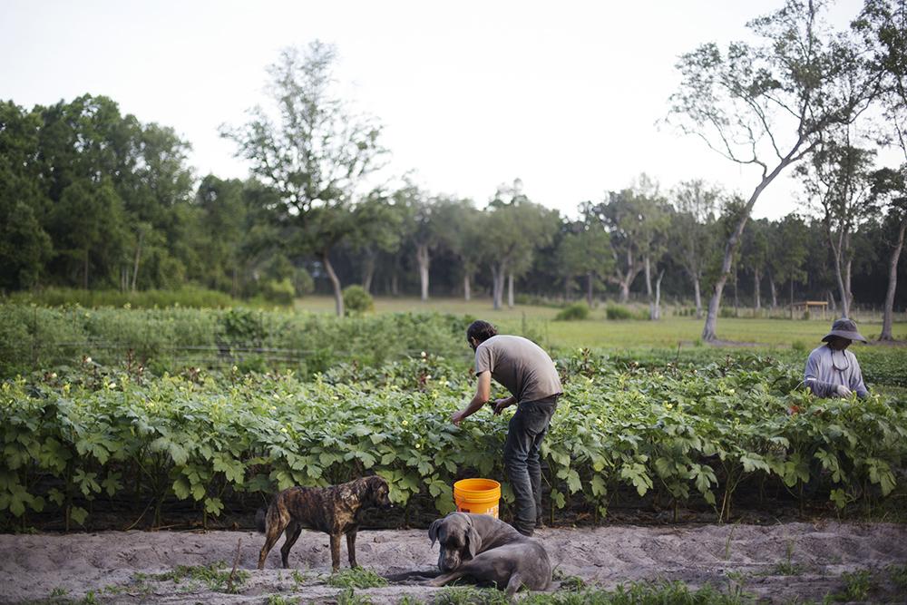 Canewater Farm Dogs, Waylon & Meadow