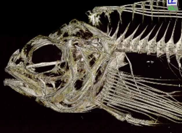 Silverspotted Sculpin (Blepsias cirrhosus)