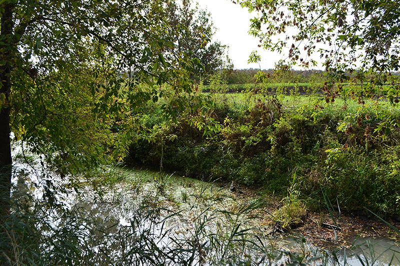 The wetland has been designed to filter local farm water before it flows into the nearby stream and to reduce the impact of flooding on farms.
