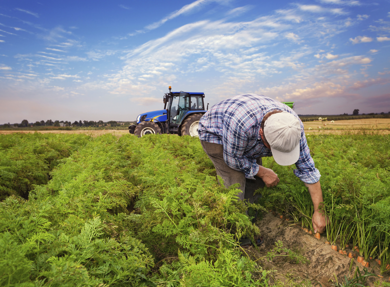 iStock_farmerinfield_Medium.jpg