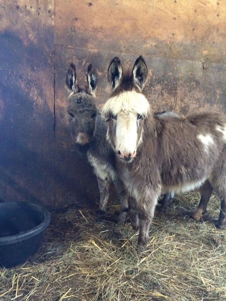 Donkey.jpg