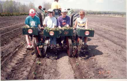 96 wrokers planting berries.jpg