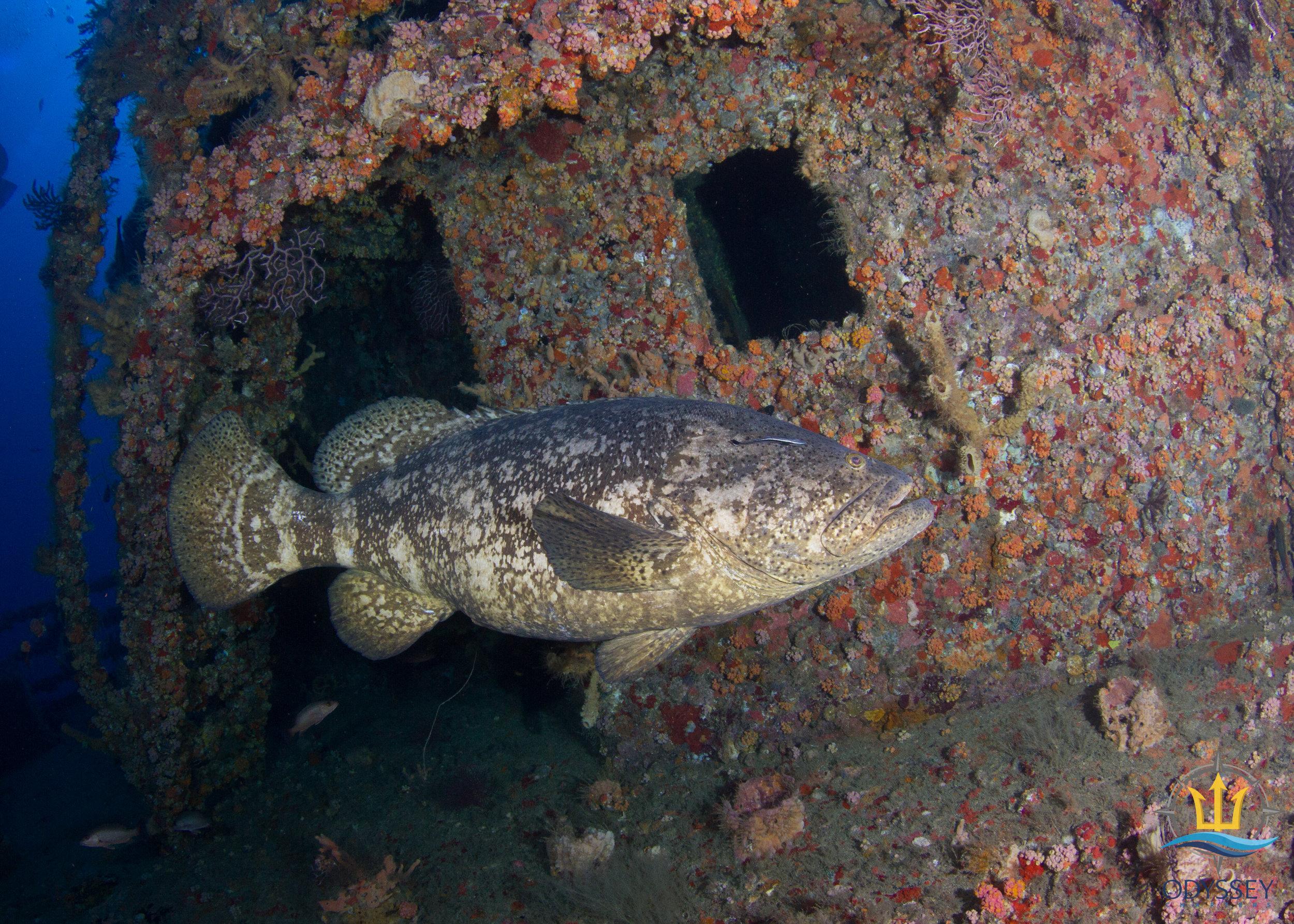 M/V Castor Shipwreck