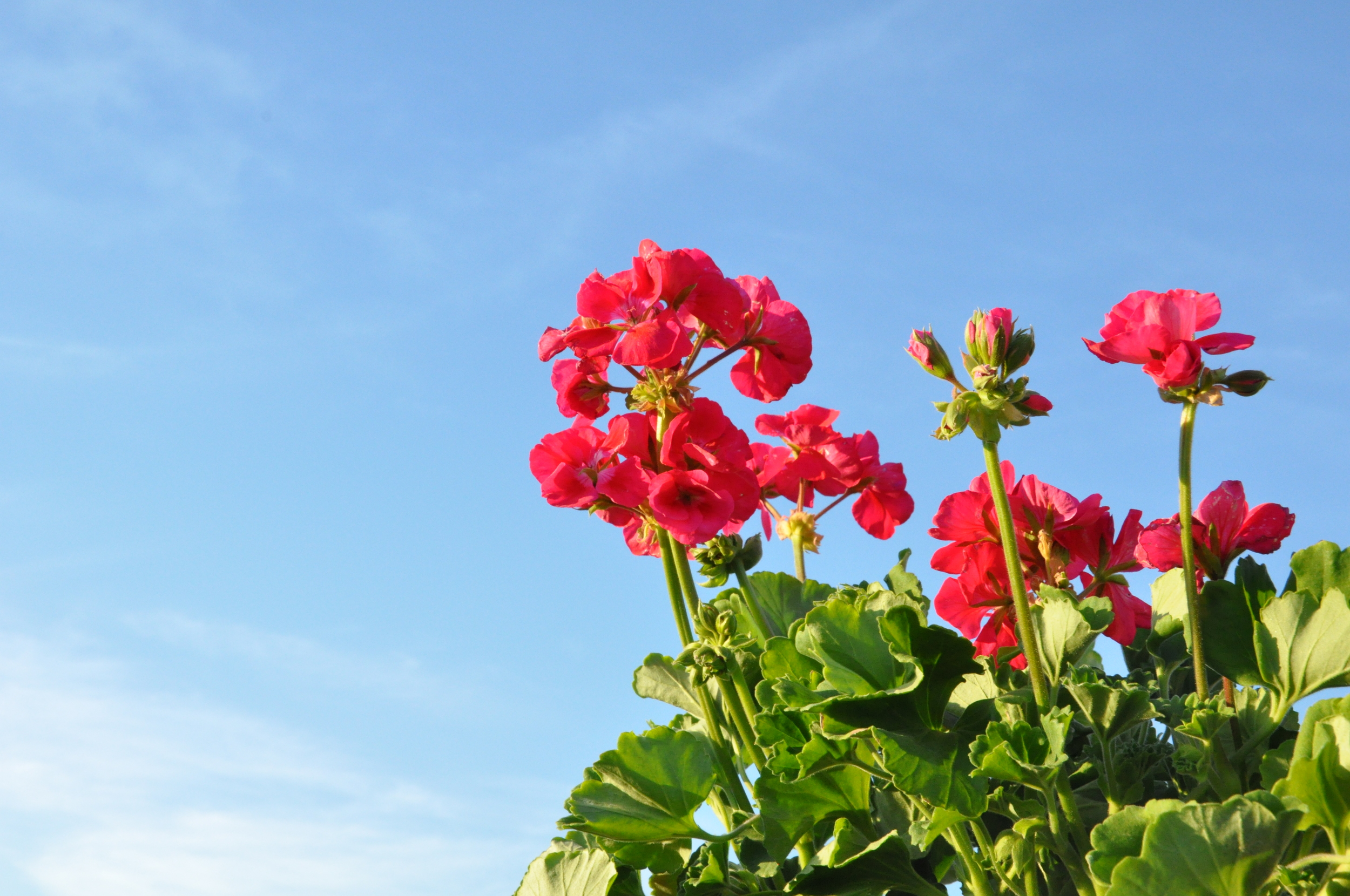 Feeling Springtime in the air with all the sunshine and blooming flowers!