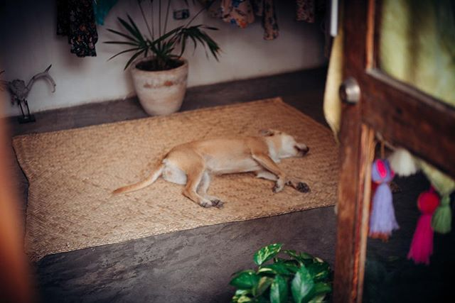 #Dogs of Mexico pt 1 - #napping #puppy #mexico #adogslife #vacation #wandering #exploring #relaxation #nayarit #lookingthrough #streets #contrast #duality #alleys #culture #texture #balance #moments #focus #color #igdaily #instagood #leica #m #typ240 #leicaphoto #leicacamera #nockton #500px