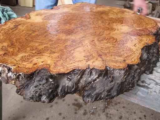 Tassie Oak crosscut slab