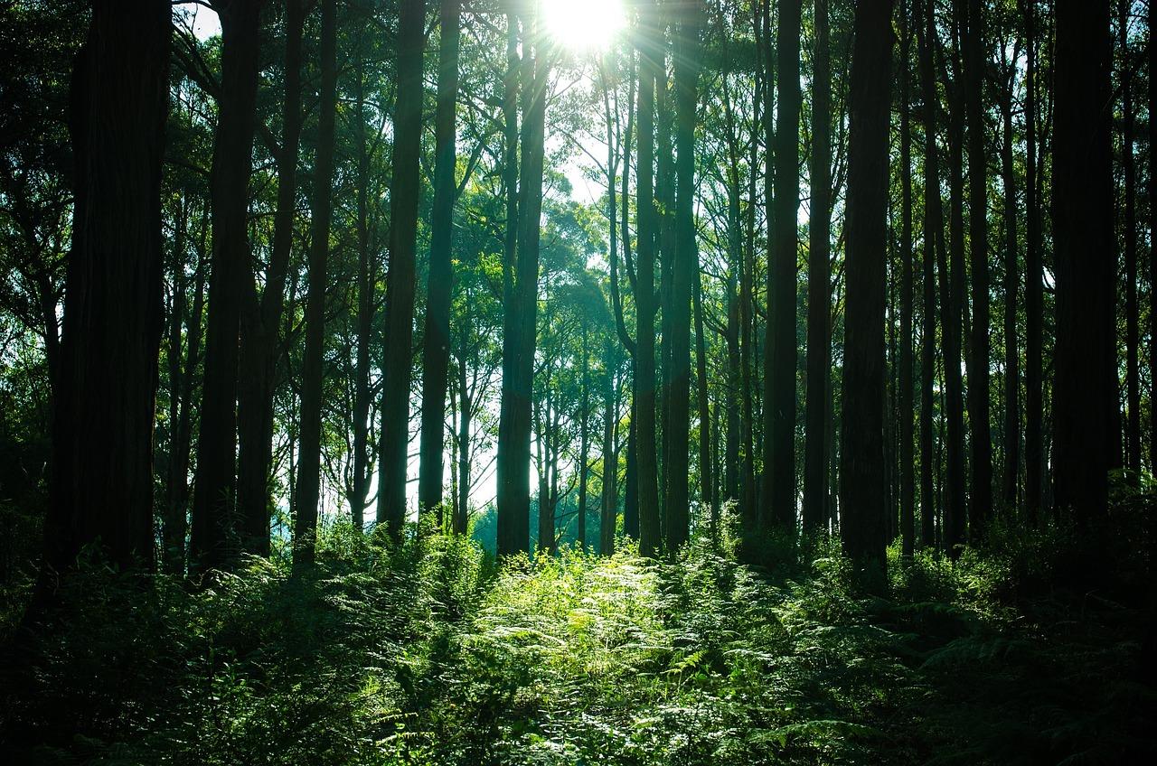 skog biobränsle.jpg