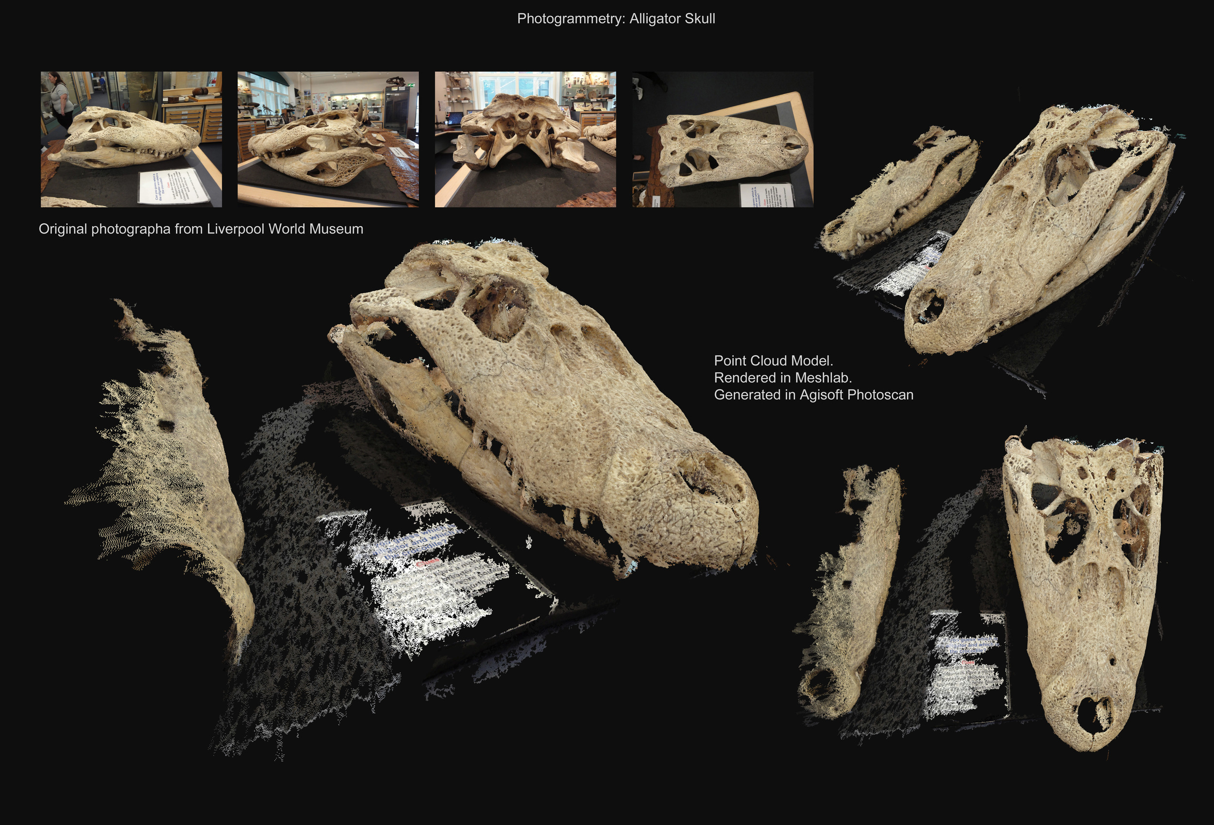 Alligator Skull - Photogrammetry - David McDonald