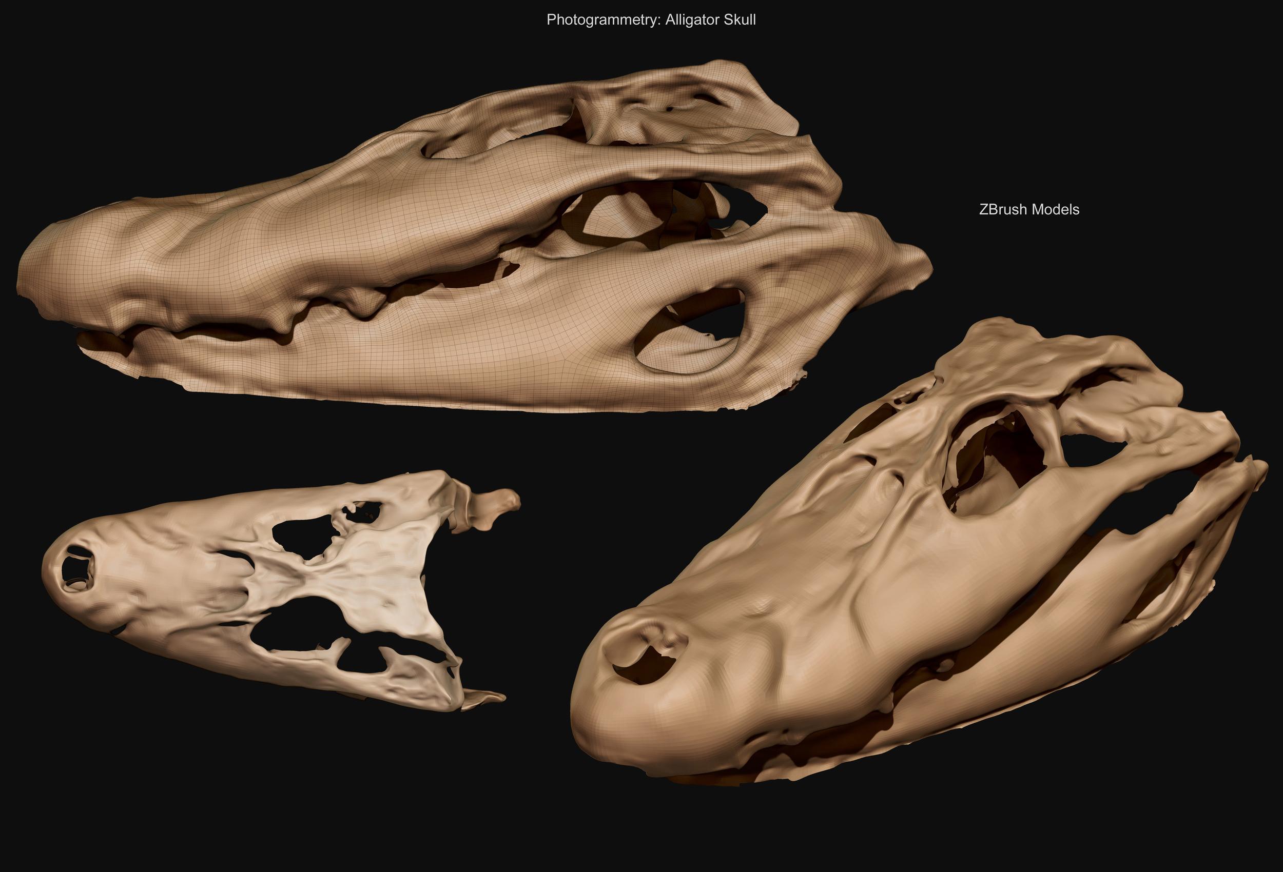 Alligator Skull - Final mesh - David McDonald