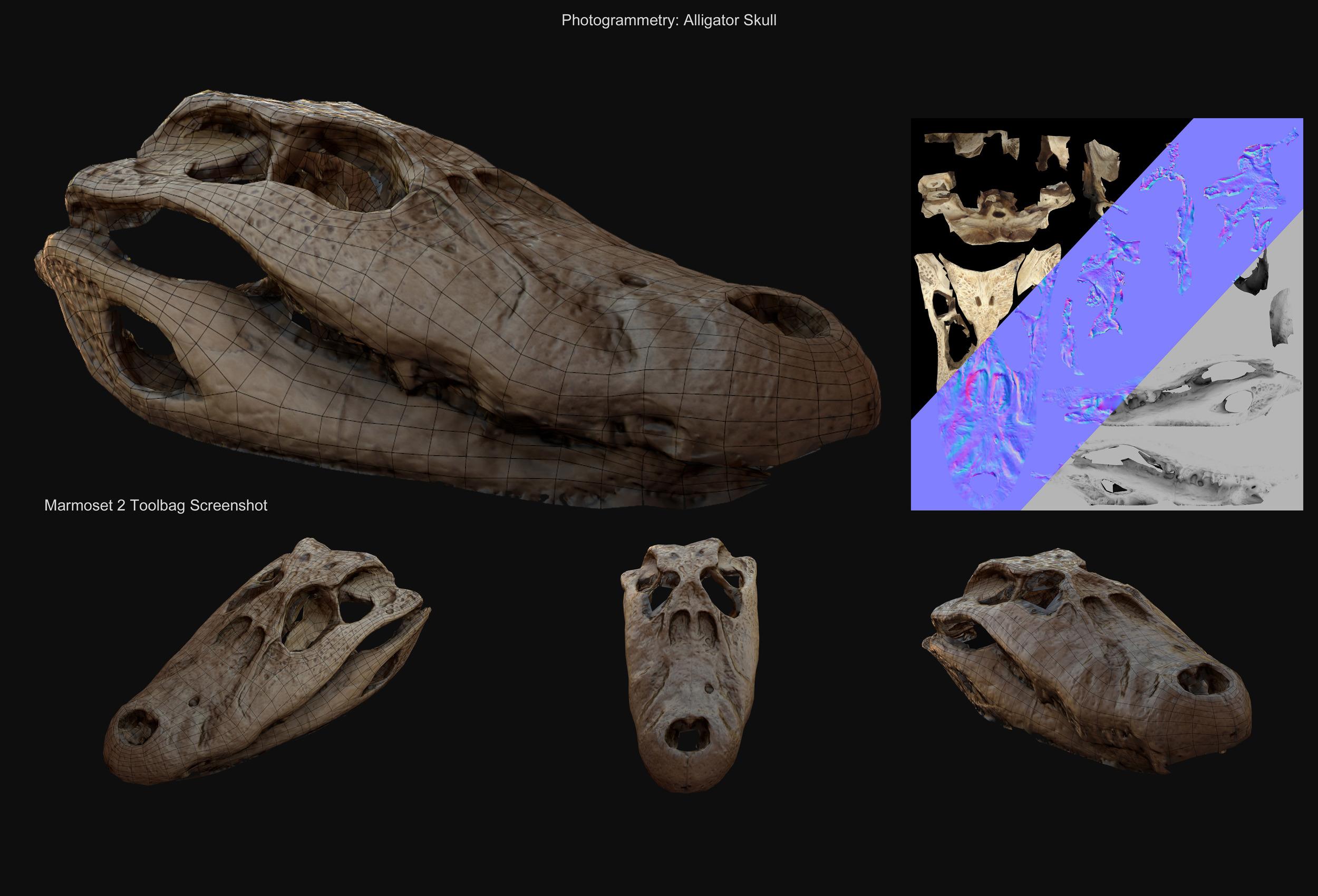 Alligator Skull - Model running in realtime engine. (Upper Right: Model textures) - David McDonald