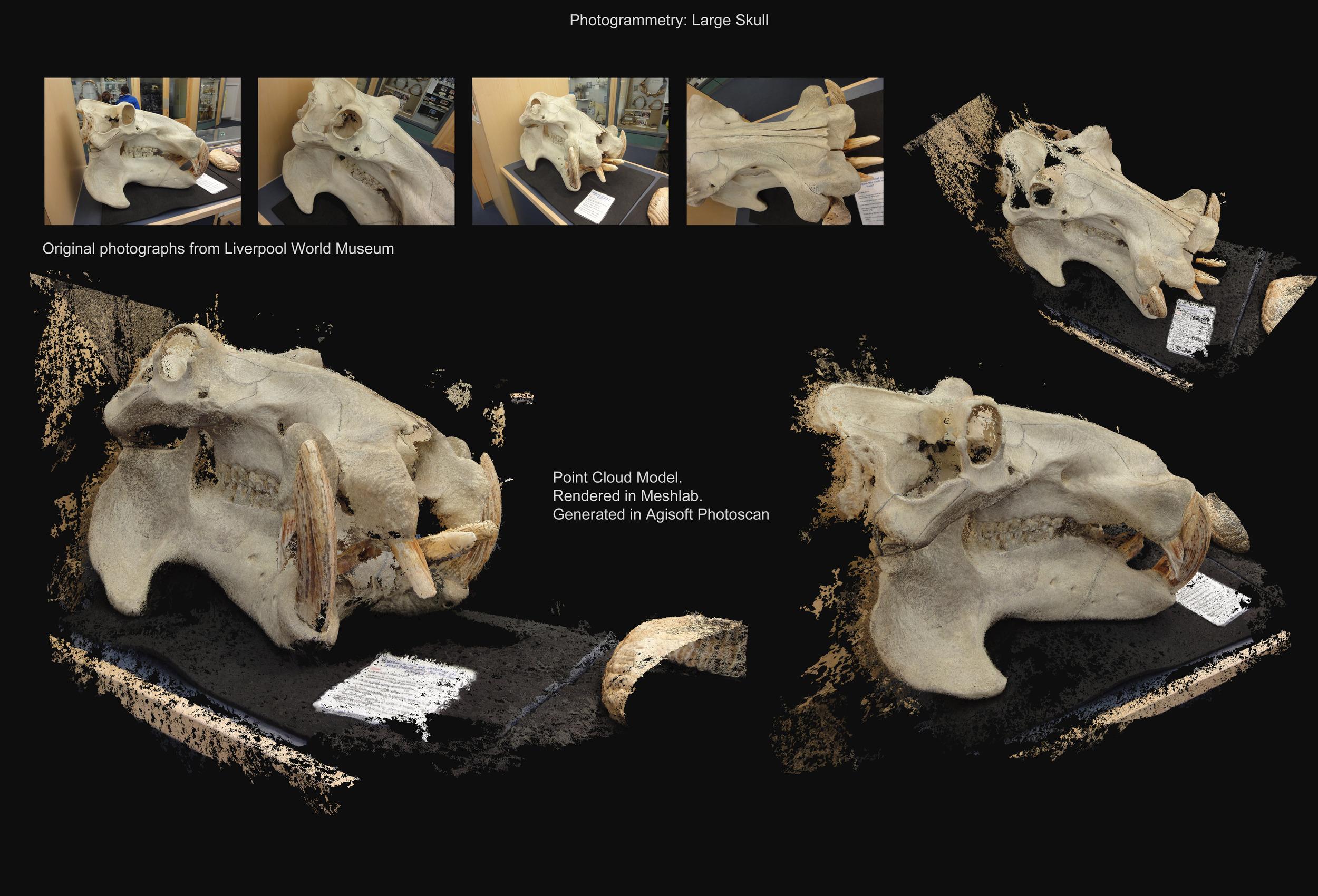 Large Skull - Photogrammetry - David McDonald