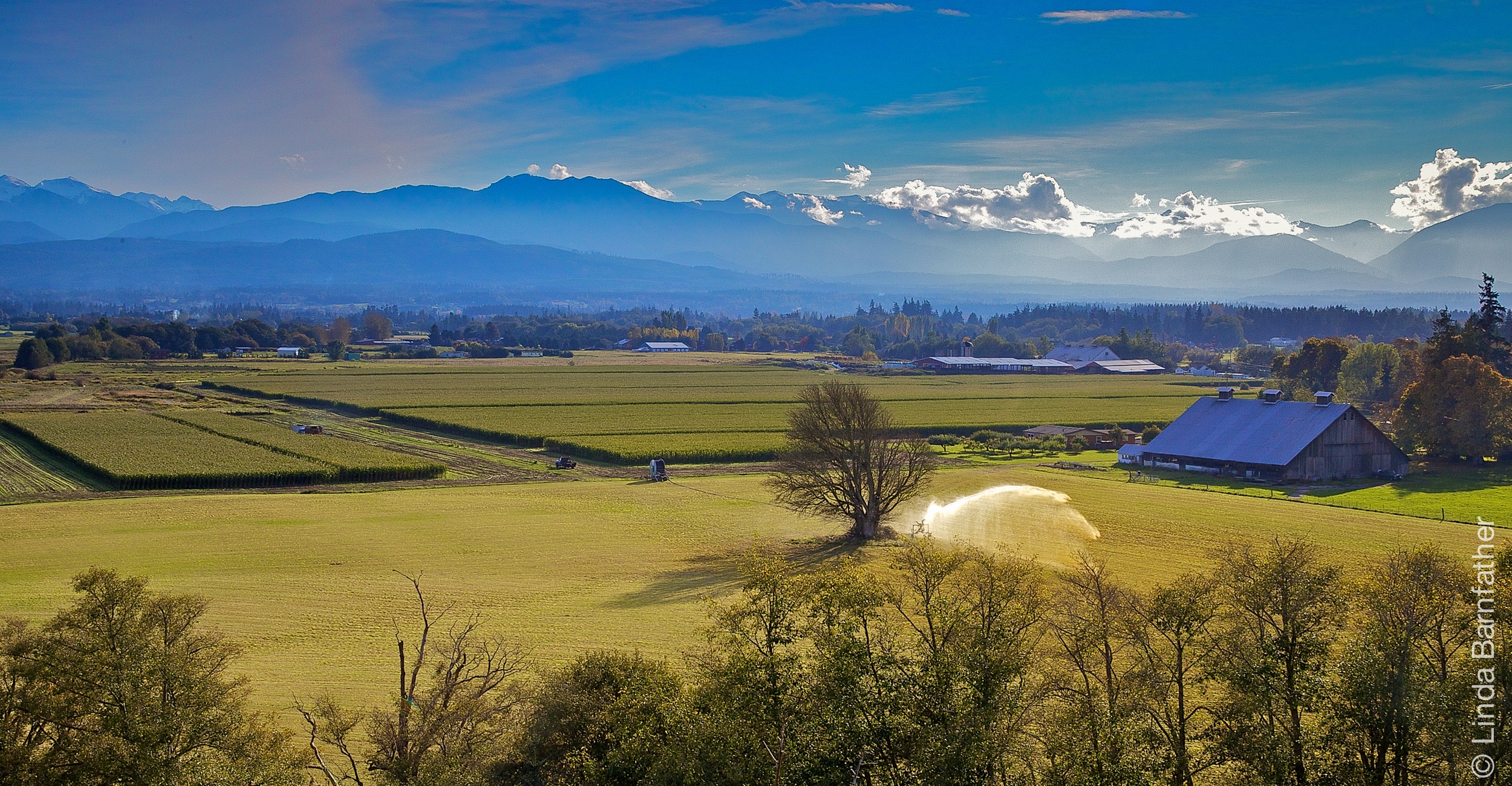 Dungeness Valley And The Olympic Mountains