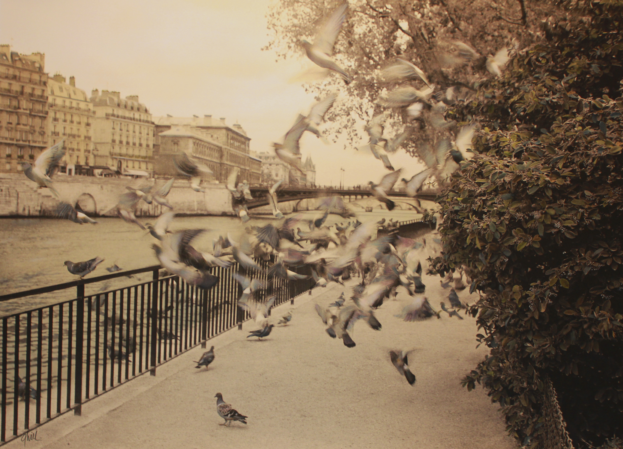 Birds of Paradise . Paris, France . Beginning at the End . Gail Hill . 2013