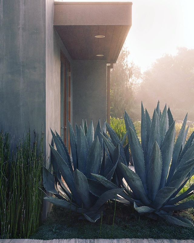 Misty entryway, Carpinteria.  You can see more from this amazing project by @elizabethvallino via the link in my bio.