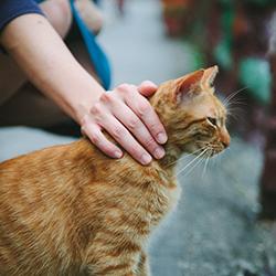 Visit a Cat Cafe