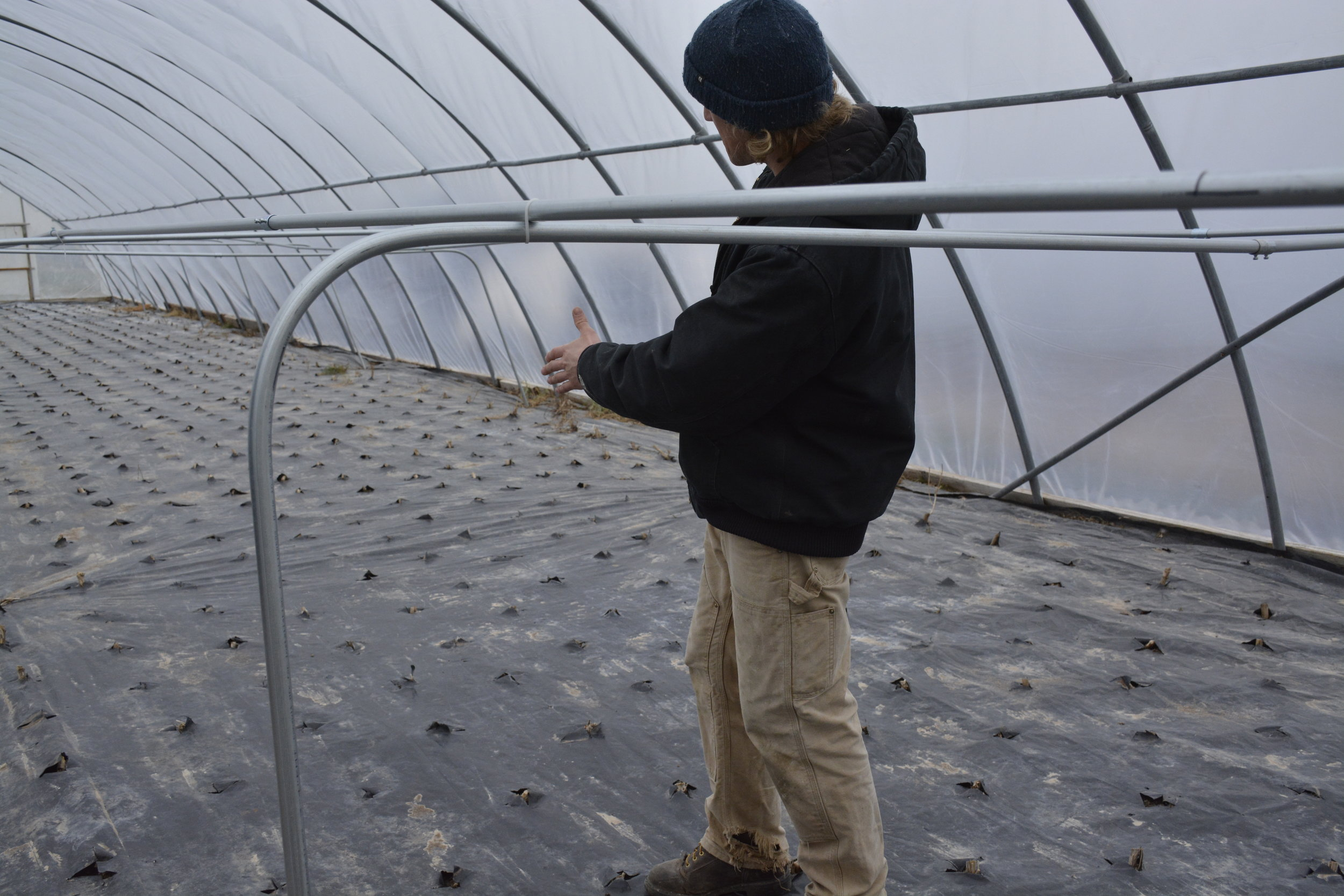 Mike watching the seedlings pop through the insulating cover
