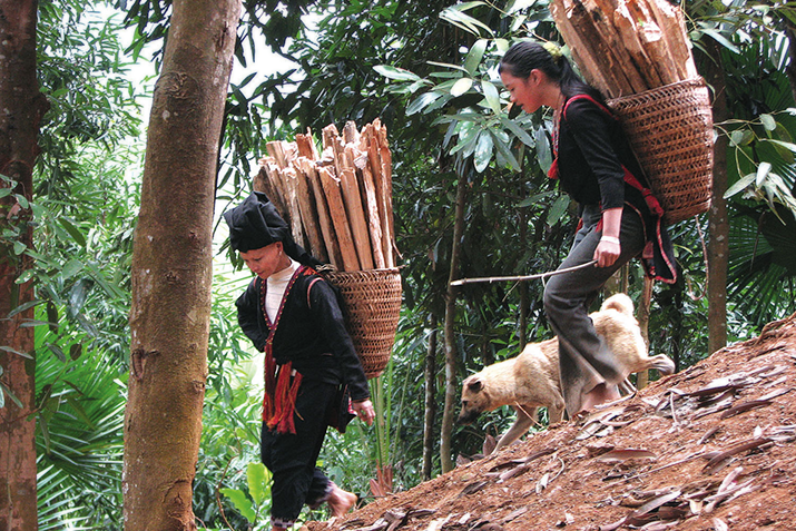 Fair trade cinnamon producers in Yen Bai Province, Vietnam. Photo courtesy of Frontier Co‑op.