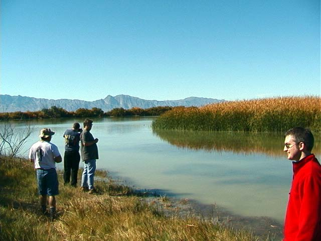 Peterson Reservoir. This shore consisted of thick matted plants. The center of the reservoir is filled with reeds