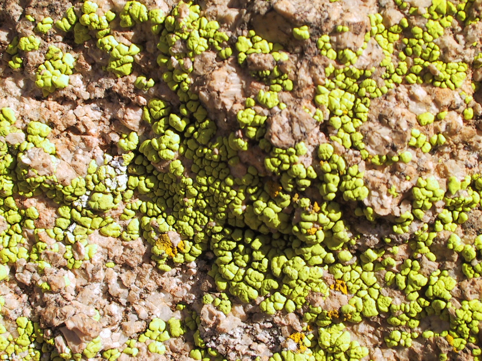 Strange Tiberium-like substance growing on the rocks.