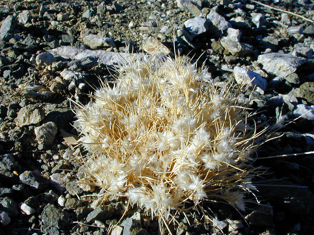 There were countless of these, whatcha-macallits growing about. They were about the size of a baseball, but much fuzzier.