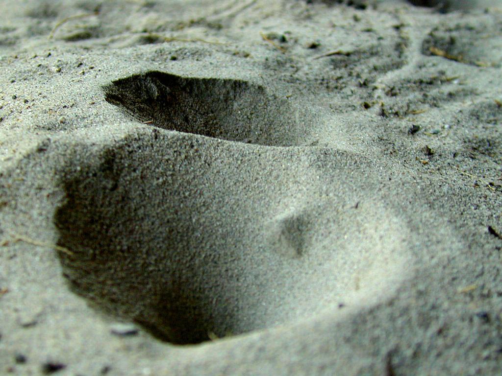 Ant Lion traps