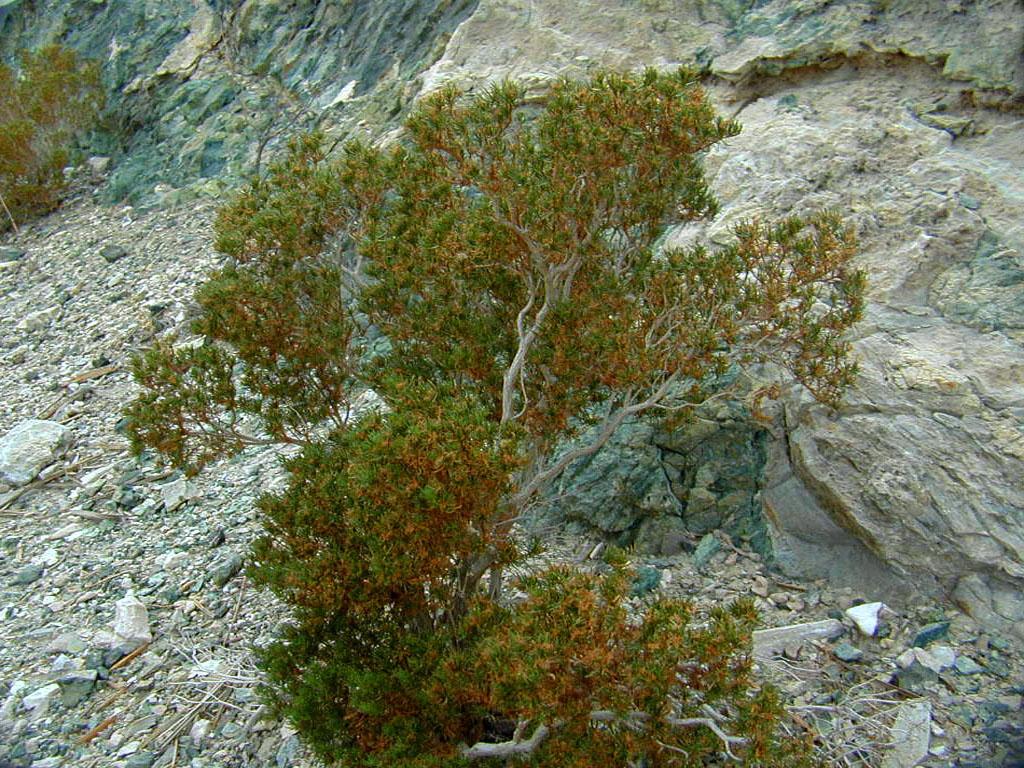Mesquite bush (I think)